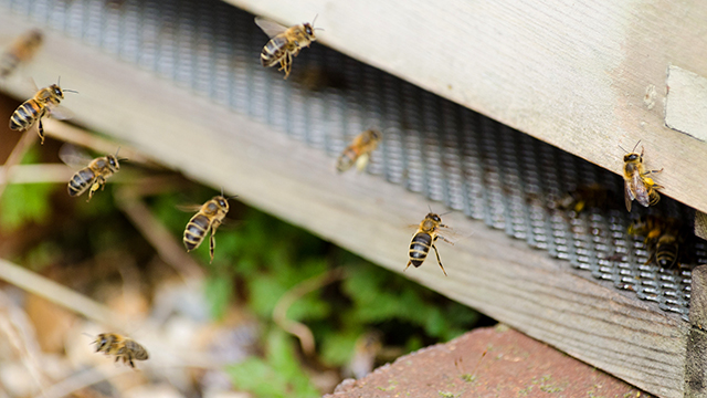 Kairos Community Trust bees