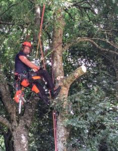 Tree surgeon Jon – Kairos Community Trust
